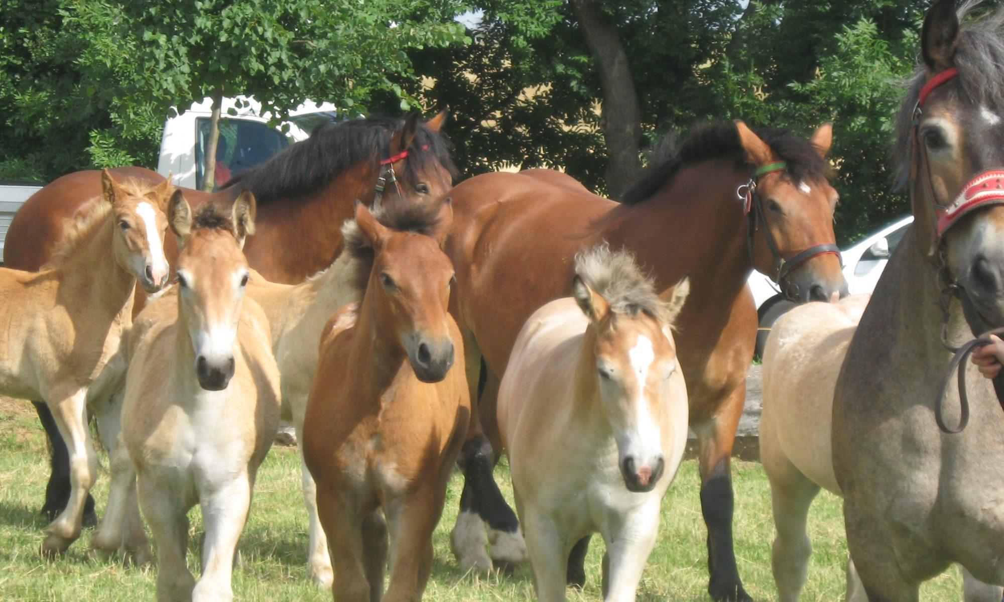 Pferdehof Gernandt